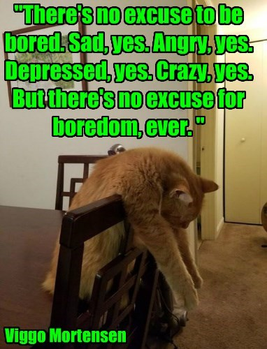 boredom caption Cats funny - 8820418304