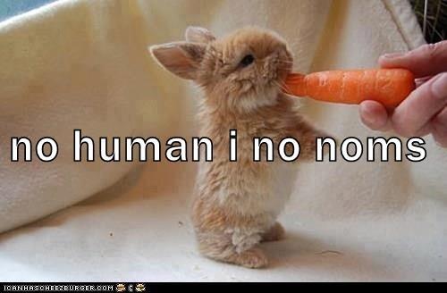 animals - 8820435200