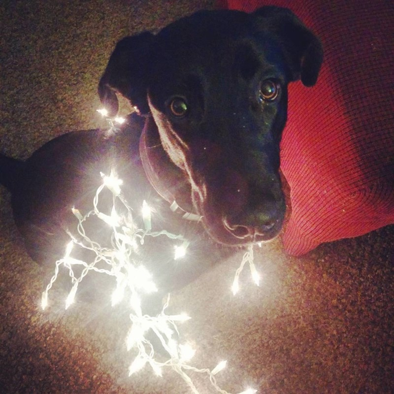 dogs,lights