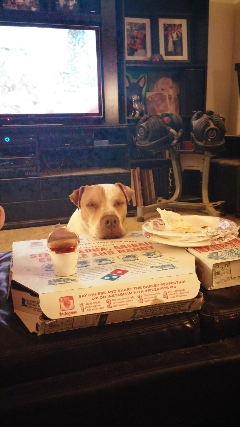 dogs pizza begging - 8820512256