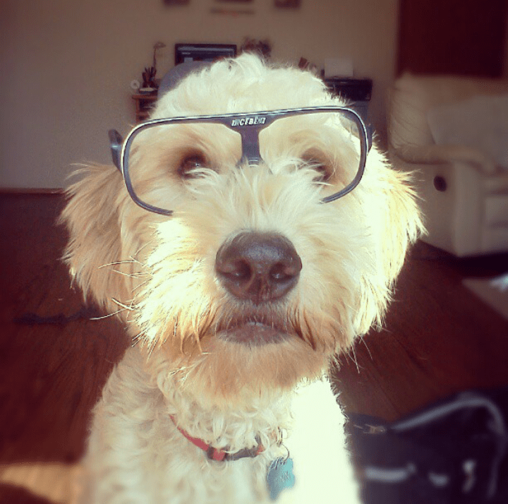 dogs glasses hipster - 8820512512