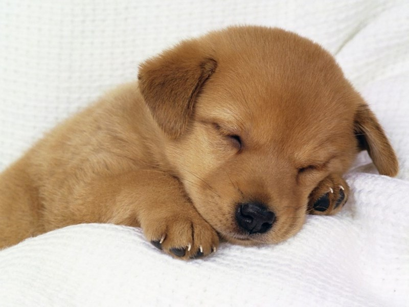 dogs puppy sleep - 8820513536