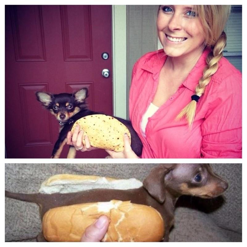 wiener dogs taco