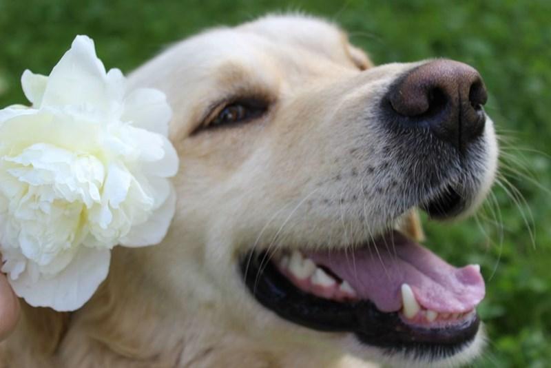 dogs Flower - 8820514304