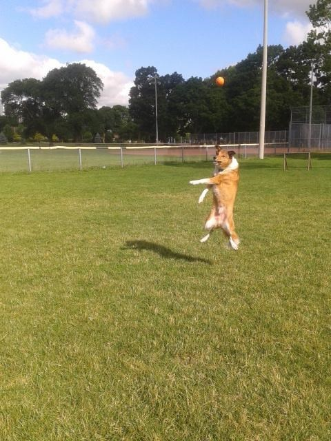 dogs ball - 8820514560