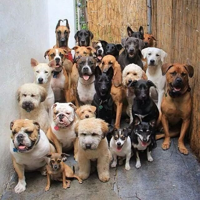 dogs pack say cheese - 8820514816