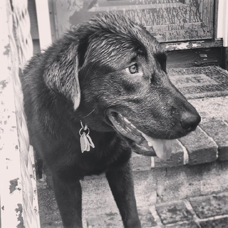 dogs rescue - 8820516608