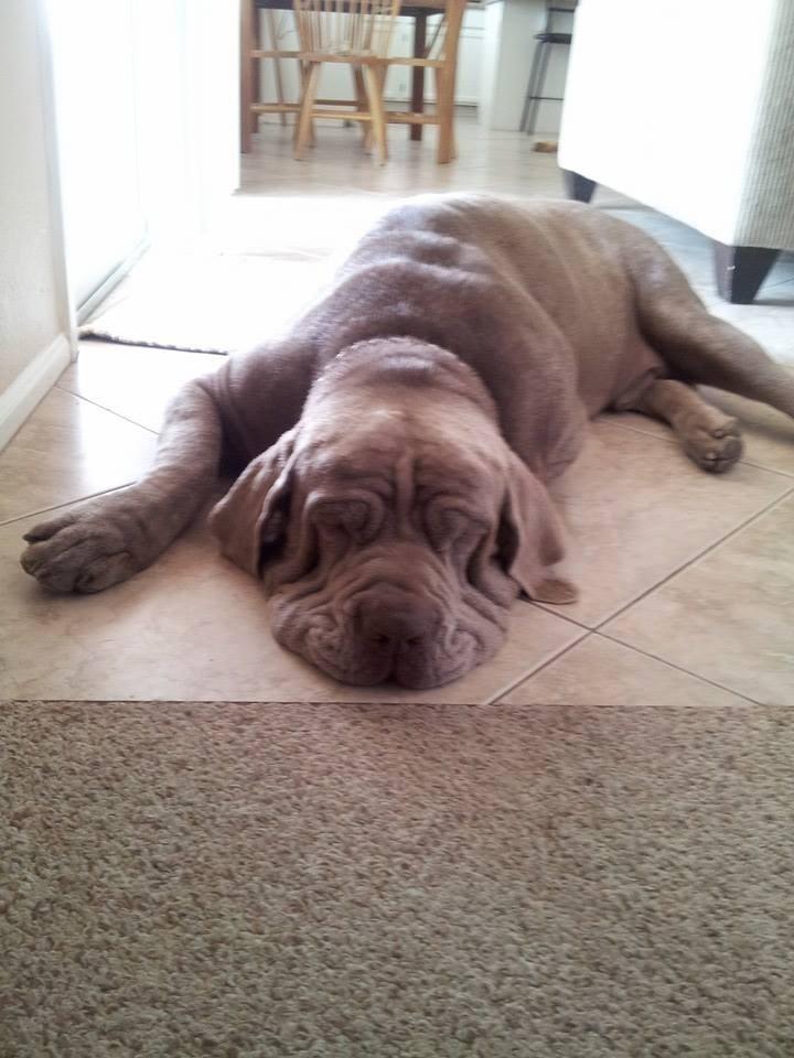 dogs melt - 8820518144