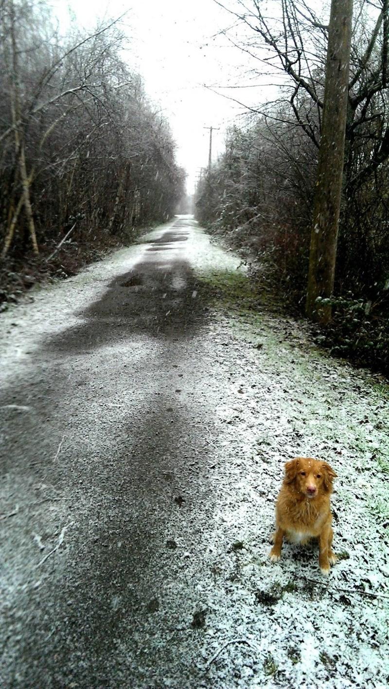 dogs,snow