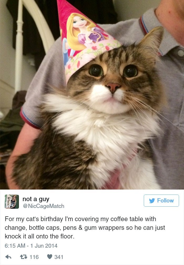 twitter birthday Cats - 8820525312