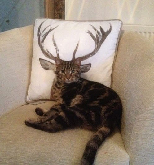 Pillow,antlers,deer,Cats