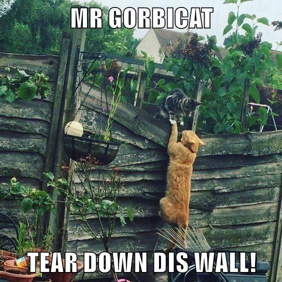 MR GORBICAT  TEAR DOWN DIS WALL!