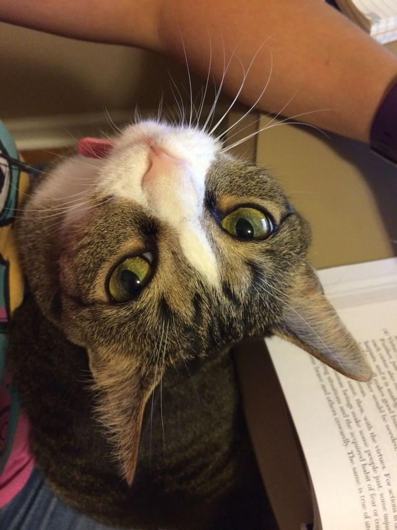 study,Cats