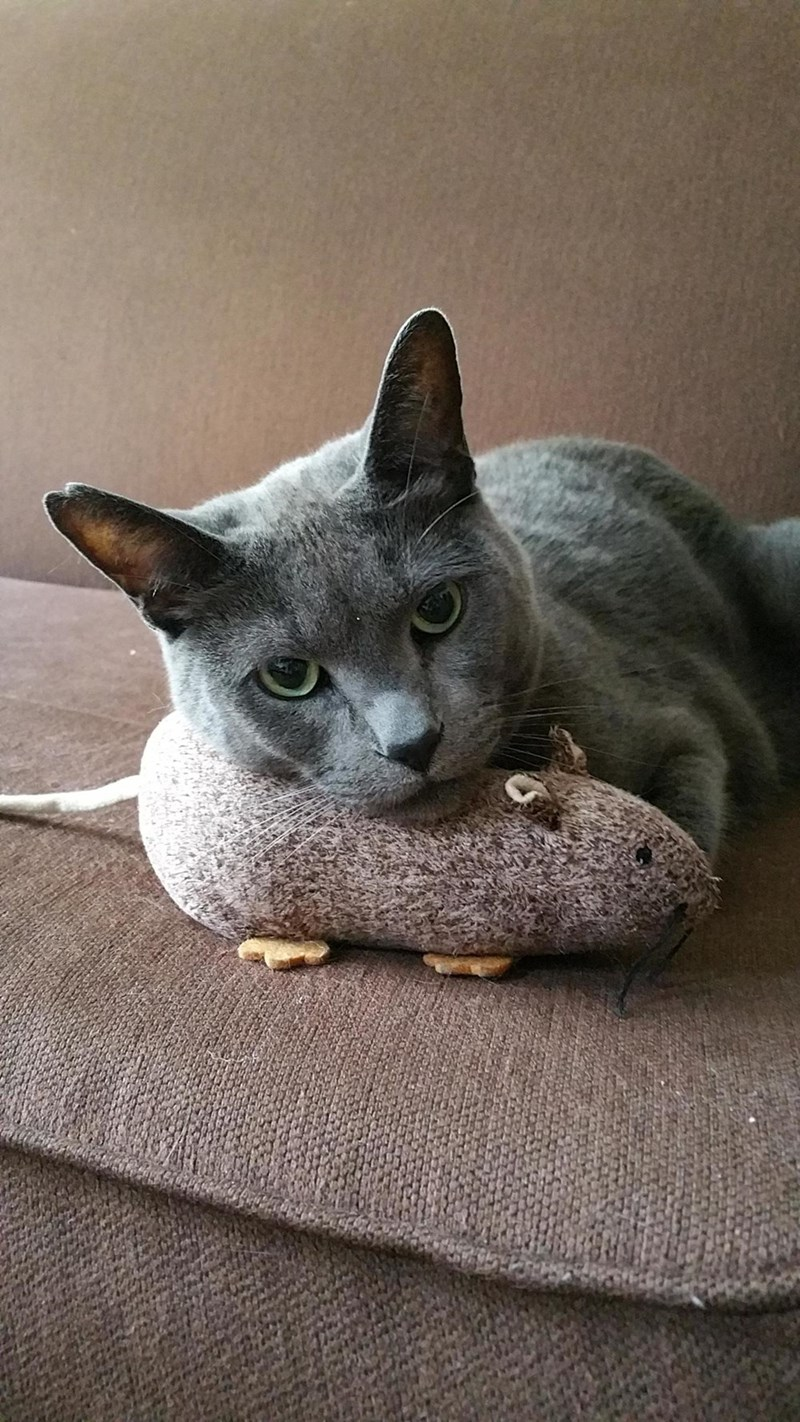look Cats - 8820556800