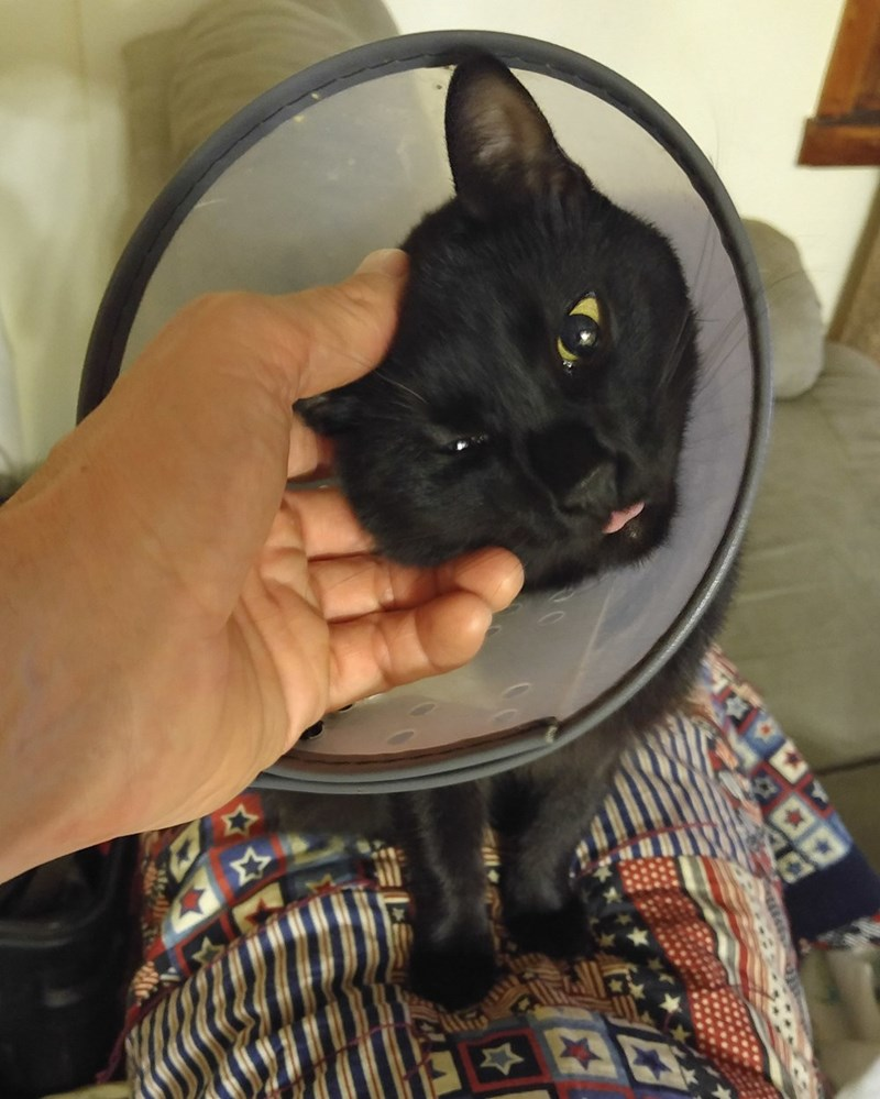 cone of shame itch Cats
