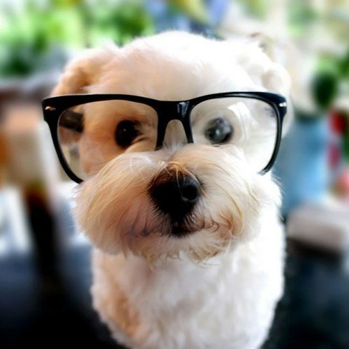 dogs glasses hipster - 8820613376