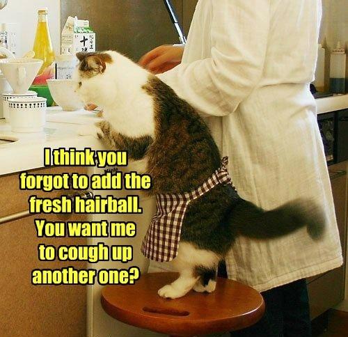 hairball baking caption Cats funny - 8820657408