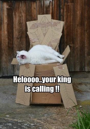 Heloooo..your king is calling !!