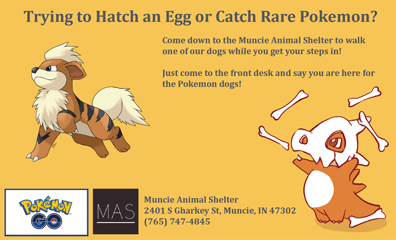 animal shelter in muncie wants pokemon go players to become dog walkers