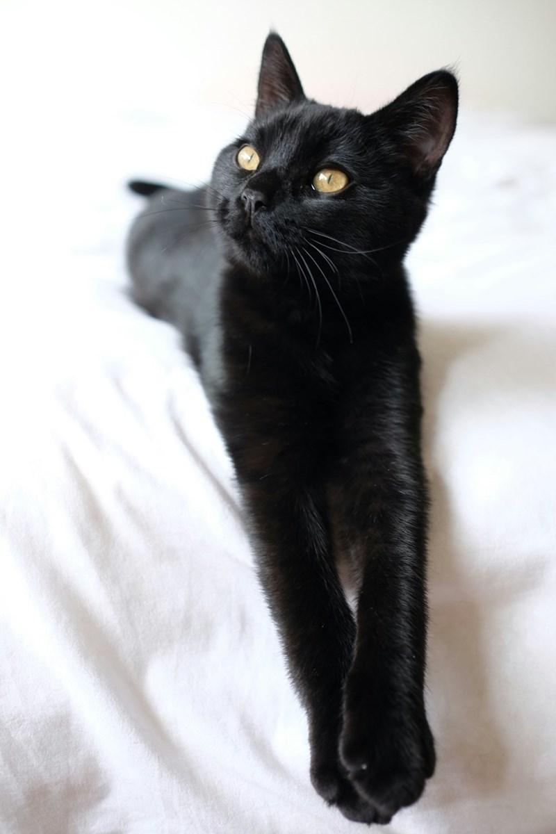 model Cats - 8820754688