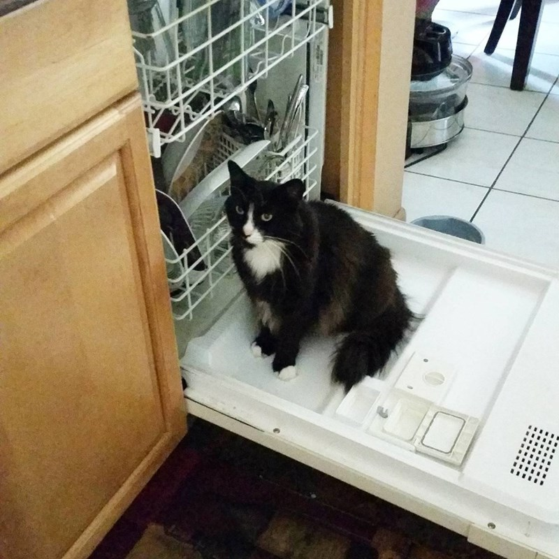dishwasher,kitchen,Cats