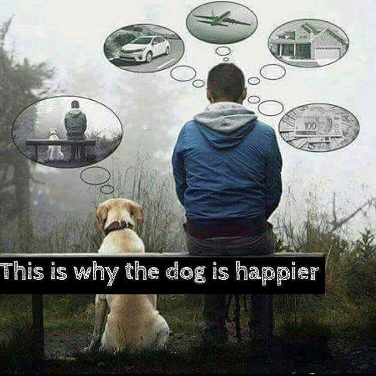 dogs happy - 8820769280