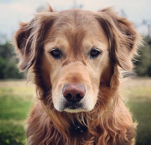 Cute picture of an old dog that is just as cute as a puppy.
