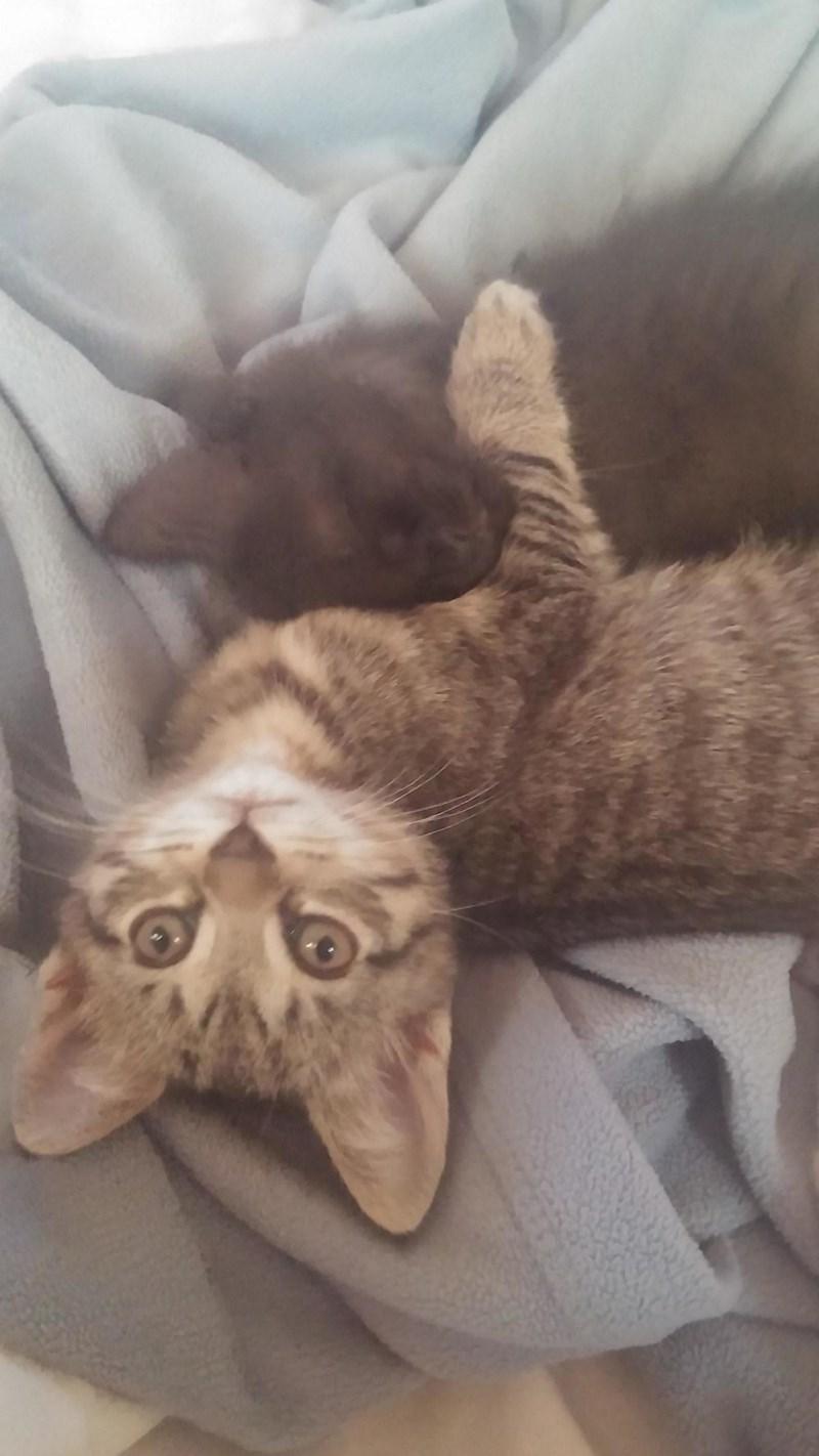 kitten Cats - 8820798720