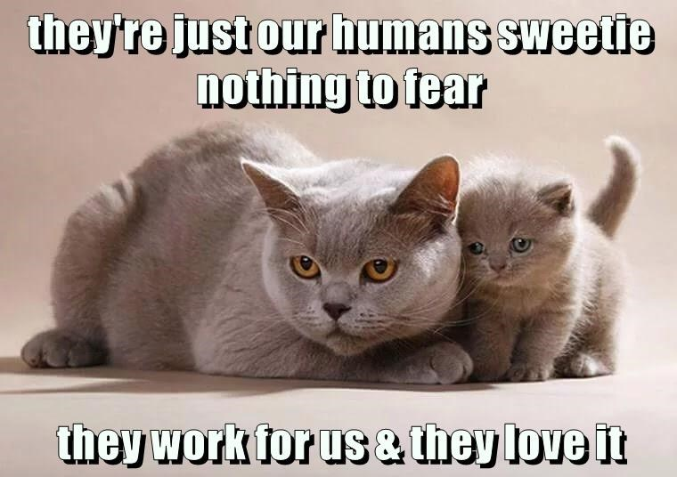 they're just our humans sweetie                                         nothing to fear  they work for us & they love it