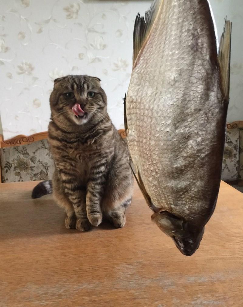 fish Cats - 8820915968