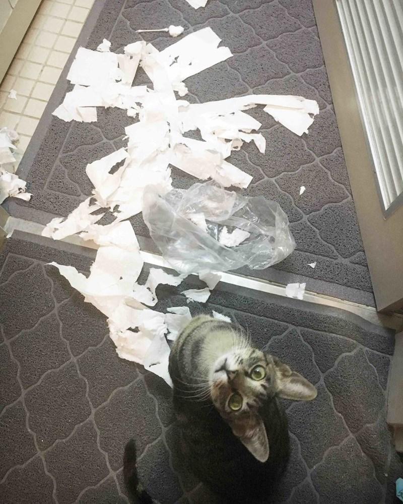 toilet paper Cats - 8820916224