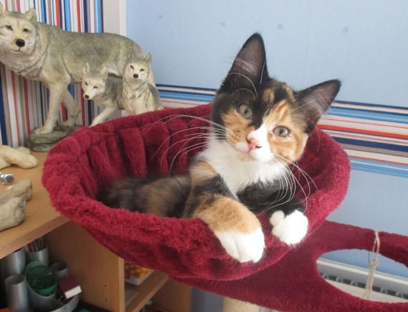 wtf Cats - 8820956672