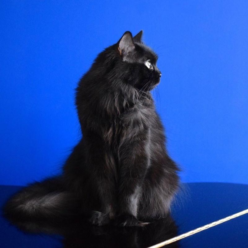 black cats Cats - 8820957440