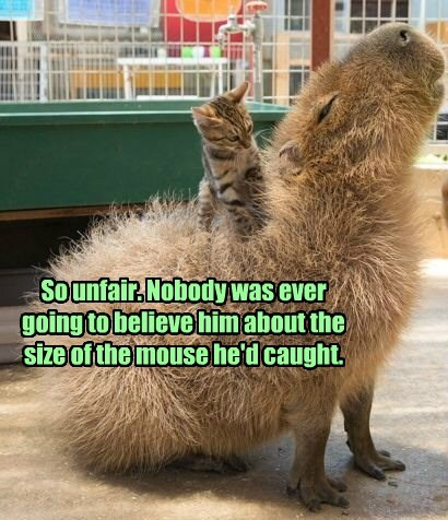So unfair. Nobody was ever going to believe him about the size of the mouse he'd caught.