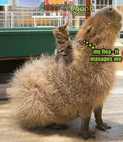 my flea - it masages me