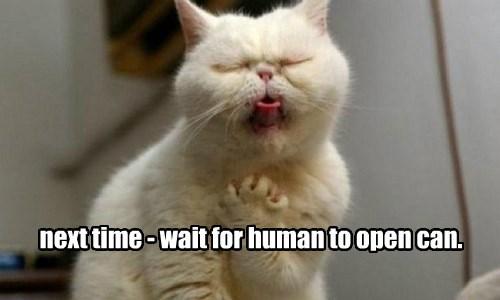wait cat open human can caption next time - 8821030656