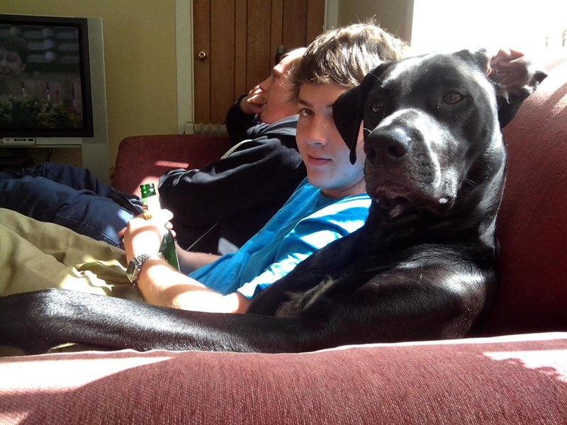 dogs,human