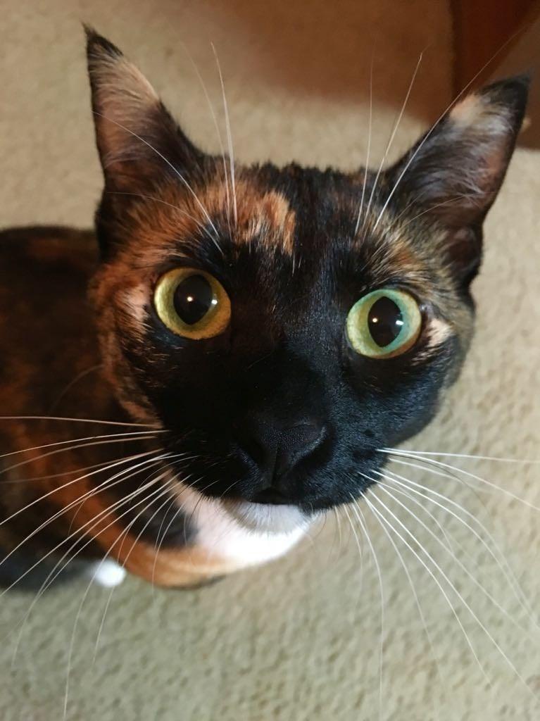 close up Cats - 8821136896