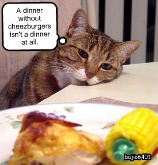 cat,without,cheezburgers,dinner,caption