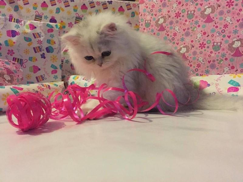 presents Cats - 8821255424