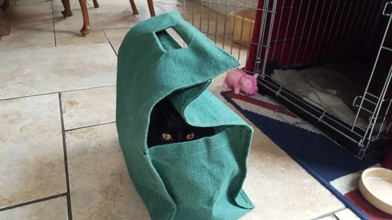 bag Cats - 8821318912