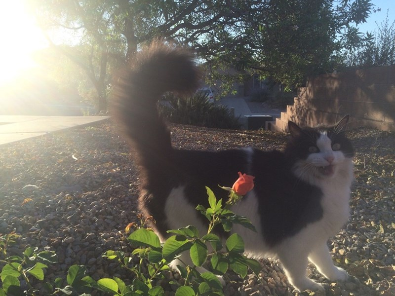 Flower,Cats