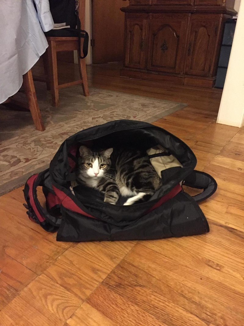 I am a cat in a bag
