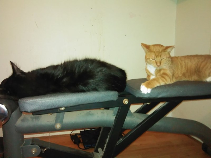 work out Cats - 8821351168