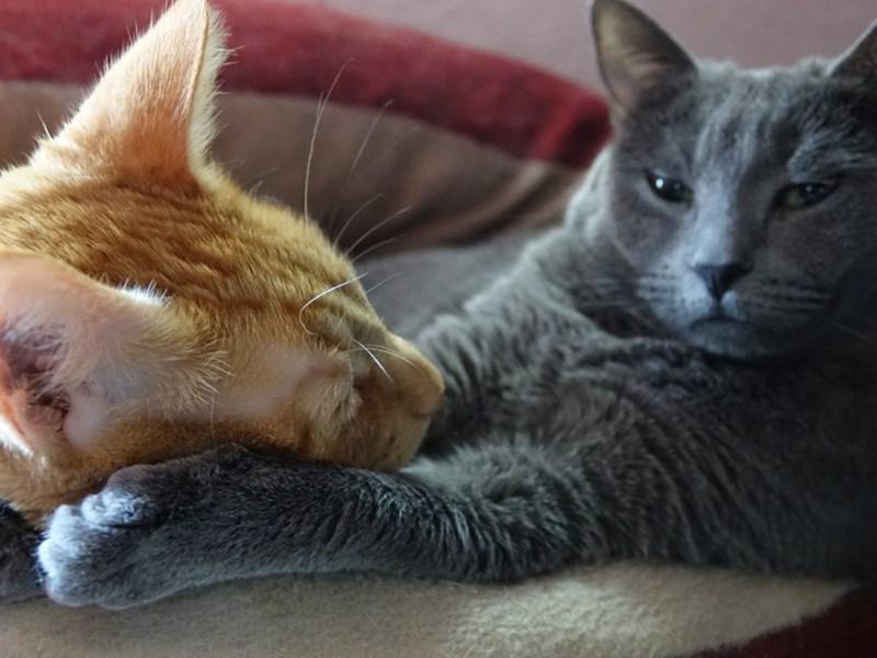 cuddle Cats - 8821360896