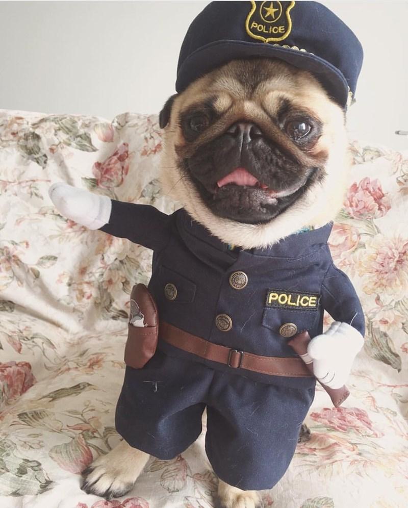 Puglice Officer