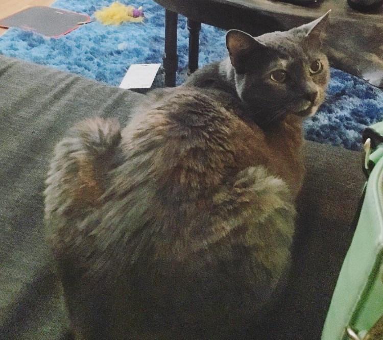 butt Cats - 8821381888