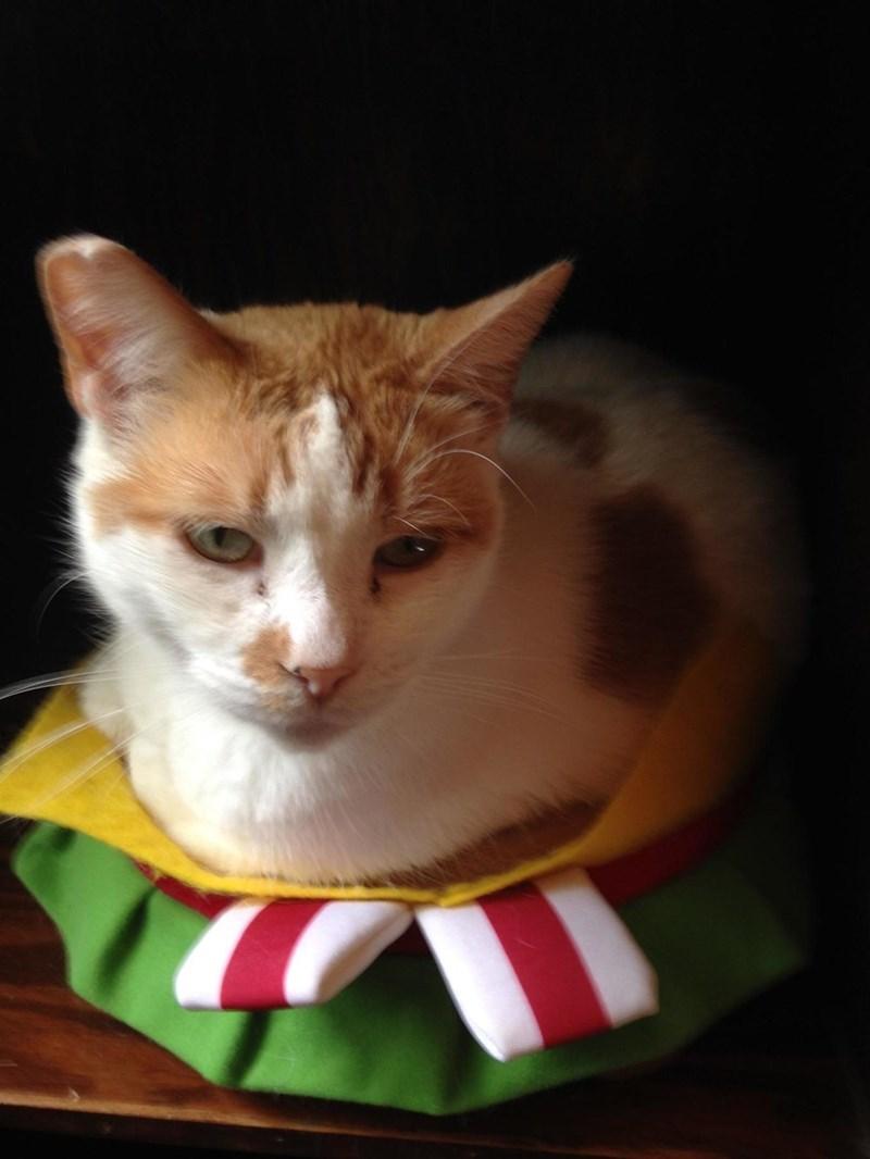 cheeseburger Cats - 8821382400