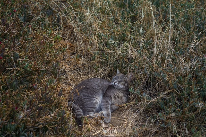 Cats - 8821382912