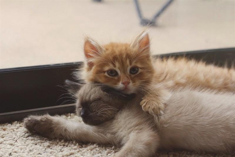 kitten Cats - 8821398784